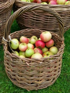 Norfolk Hedge Baskets - About Me - Apple Basket