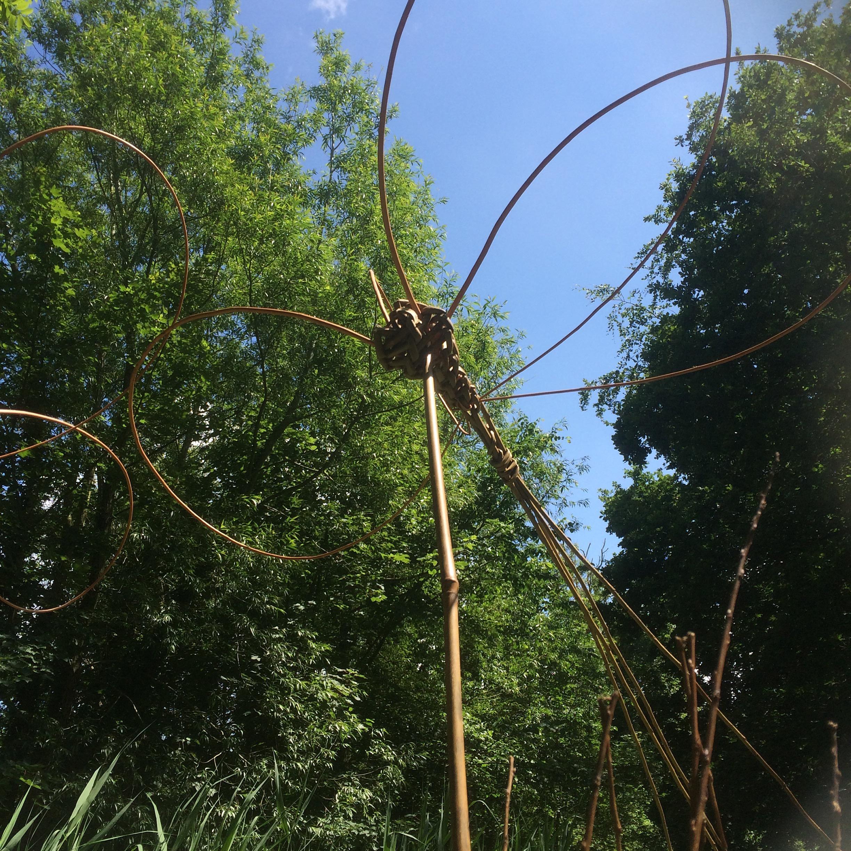 Willow dragonfly voucher